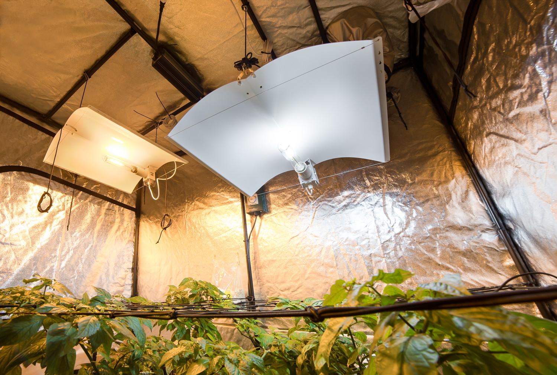 Hydroponics 450w CFL Dual Spectrum light bulb veg flowering with bulb holder uk