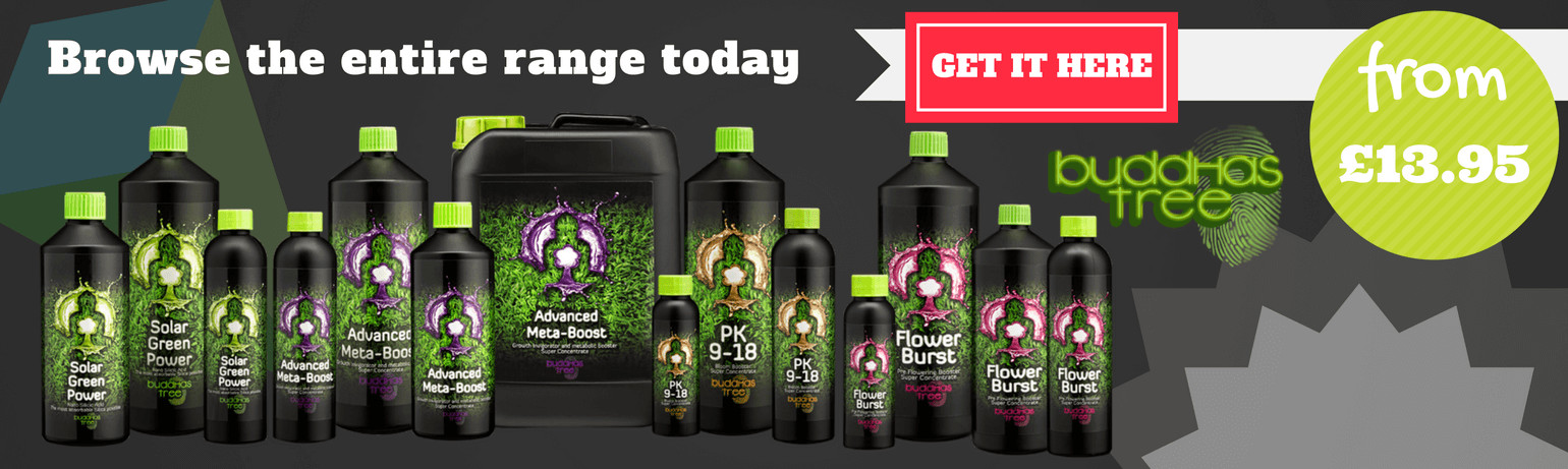 Buddhas Tree Range Available Now